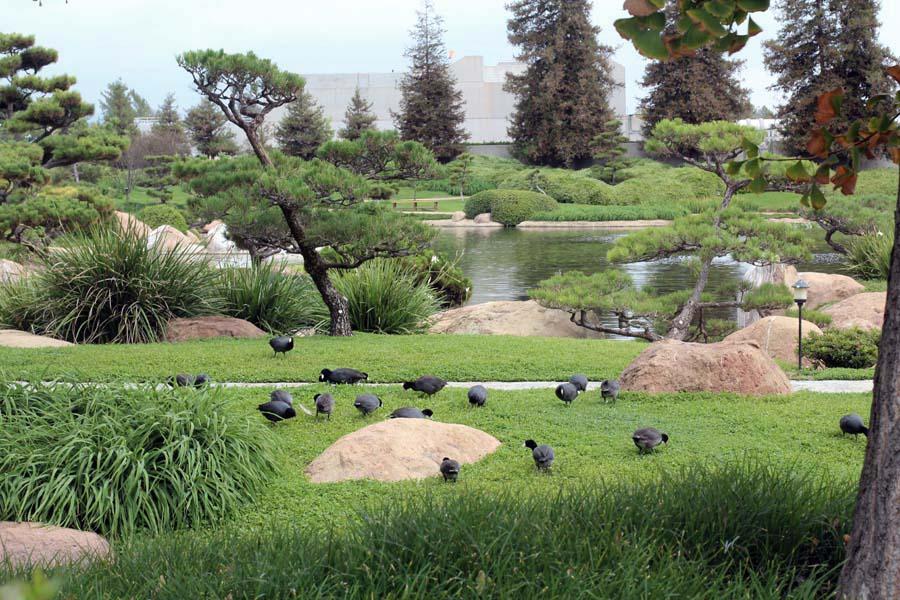 Birds Japanese Garden